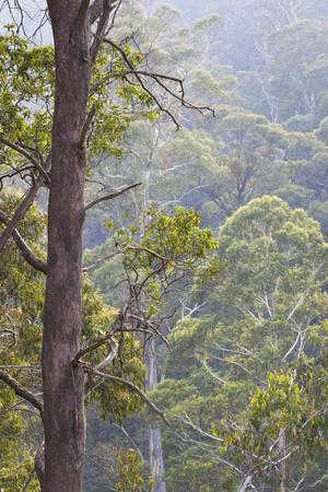 https://imgc.artprintimages.com/img/print/australia-kosciuszko-national-park-tom-groggin-trees_u-l-pu3wvb0.jpg?p=0