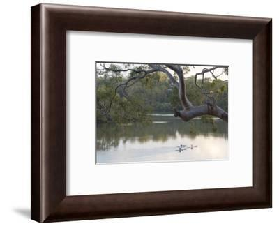 Australia, New South Wales, Sydney suburb Lugarno. Kayakers on peaceful Georges River-Trish Drury-Framed Photographic Print