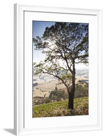 Australia, Victoria, Buninyong, Landscape from Mount Buninyong-Walter Bibikow-Framed Photographic Print