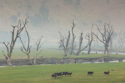 Australia, Victoria, Huon, Lake Hume with Forest Fire Smoke-Walter Bibikow-Photographic Print