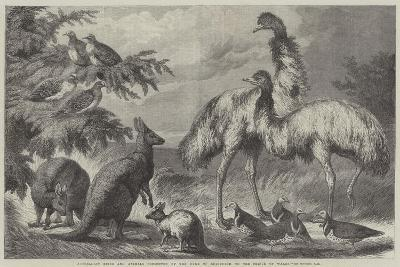 Australian Birds and Animals Presented by the Duke of Edinburgh to the Prince of Wales-Samuel John Carter-Giclee Print