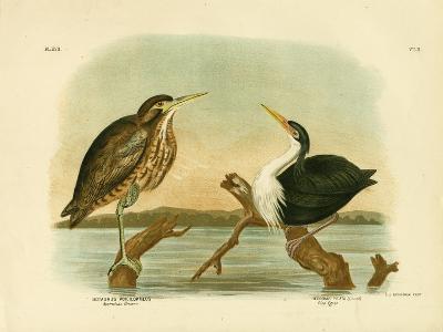 Australian Bittern, 1891-Gracius Broinowski-Giclee Print