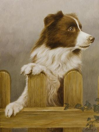 Australian Sheep Dog-John Silver-Giclee Print