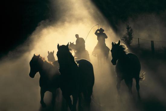 Australian Stock Horses Being Mustered at Stockyard Creek, Victoria, Australia-Peter Walton Photography-Photographic Print