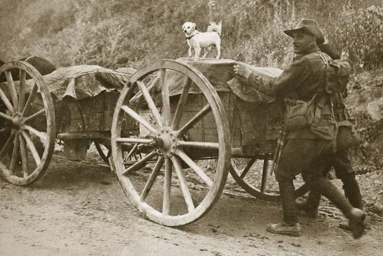 Australian troops returning from the trenches with their mascot, World War I, France, 1916-Unknown-Photographic Print