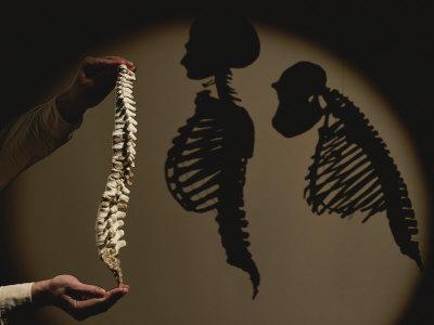 https://imgc.artprintimages.com/img/print/australopithecus-afarensis-model-with-human-and-chimp-shadows-behind_u-l-p4q1v50.jpg?p=0