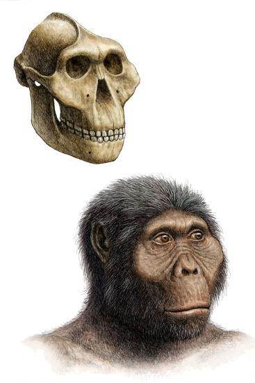 Australopithecus Boisei-Mauricio Anton-Photographic Print