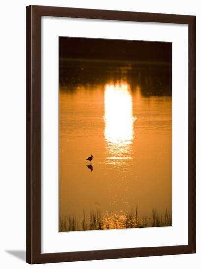 Austria, Burgenland, Neusiedlersee (Lake), Fertš National Park, Water, Bird, Sundown-Rainer Mirau-Framed Photographic Print
