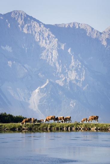 Austria, Styria, Hoher Dachstein, Mountain Lake, Cows, Mountain Scenery-Rainer Mirau-Photographic Print