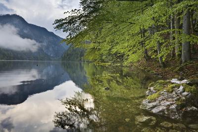 Austria, Styria, Salzkammergut (Region), Toplitzsee (Lake), Morning Mood, Lake, Shore-Rainer Mirau-Photographic Print