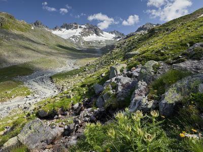 Austria, Tyrol, Bieltal (Valley), Totenfeldkopf (Mountain), Plants, Thistle-Rainer Mirau-Photographic Print