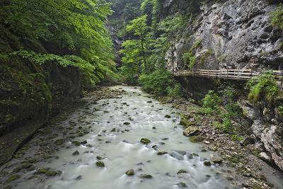 Austria, Vorarlberg, Dornbirn (Village), Rappenlochschlucht (Ravine) (Gulch)-Rainer Mirau-Photographic Print