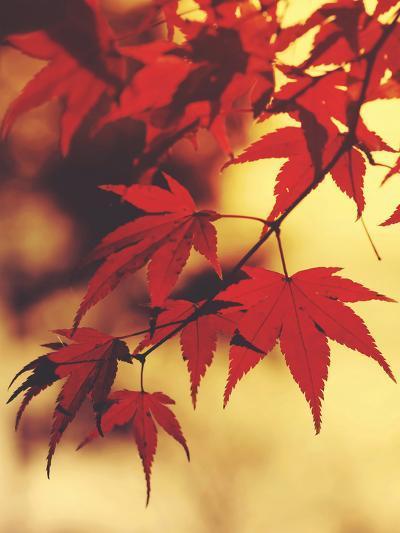 Autum Colorful Leaves Maple-Grab My Art-Art Print