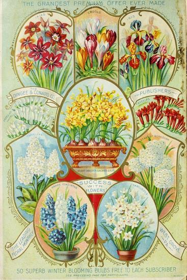 Autumn 1900 Winter Blooming-Vintage Apple Collection-Giclee Print