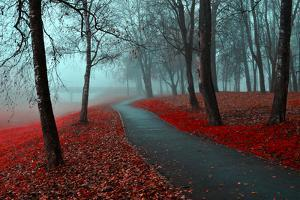 Autumn Alley in the Fog - Gothic Autumn Landscape in Cloudy Weather with Bare Red Trees along Alley