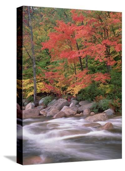 Autumn along Swift River, White Mountains National Forest, New Hampshire-Tim Fitzharris-Stretched Canvas Print