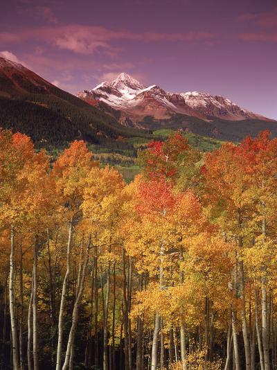 Autumn Aspen Colors, Mt. Wilson, San Juan Nf, CO-Stuart Westmorland-Photographic Print