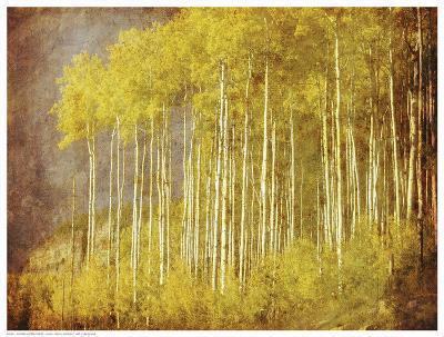 Autumn Aspen Forest--Art Print