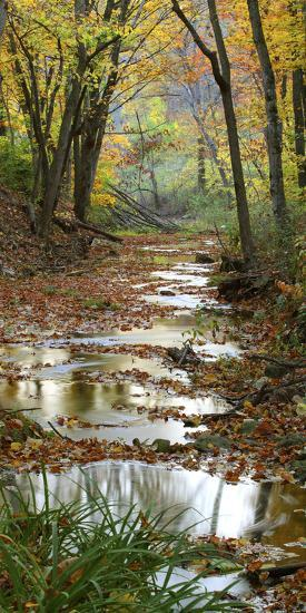 Autumn at Schuster Hollow in Grant County, Wisconsin, Usa--Photographic Print