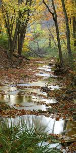 Autumn at Schuster Hollow in Grant County, Wisconsin, Usa