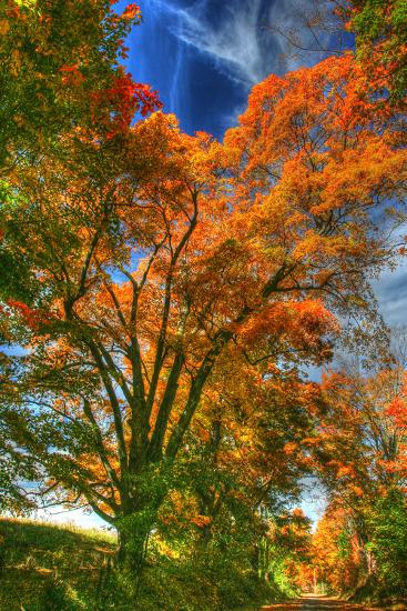 Autumn Borden Road Vertical-Robert Goldwitz-Photographic Print