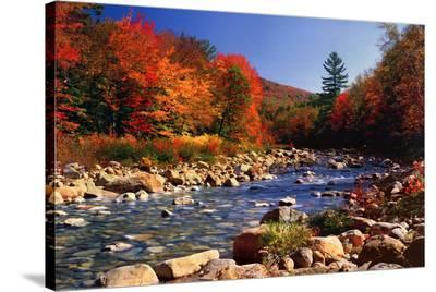 Autumn Brook--Stretched Canvas Print