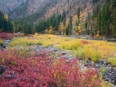 https://imgc.artprintimages.com/img/print/autumn-color-along-the-wenatchee-river-tumwater-canyon-wenatchee-national-forest-washington-usa_u-l-p2u7ey0.jpg?p=0