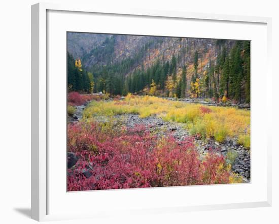 Autumn Color Along the Wenatchee River, Tumwater Canyon, Wenatchee National Forest, Washington, USA-Jamie & Judy Wild-Framed Photographic Print