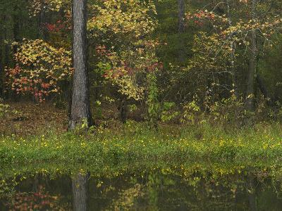 Autumn Color at Millwood Lake State Park, Arkansas, Usa-Tim Fitzharris-Photographic Print