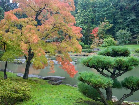Autumn Color at the Japanese Garden, Washington Park Arboretum, Seattle, Washington, USA-Jamie & Judy Wild-Photographic Print