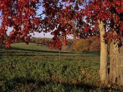 Autumn Color Frames the Rolling Hills of the Virginia Foxhunt Country-Stephen St^ John-Photographic Print