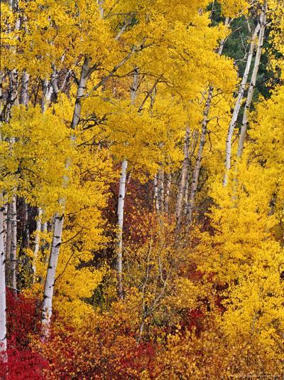 Autumn Color in the Flathead Valley, Montana, USA-Chuck Haney-Photographic Print