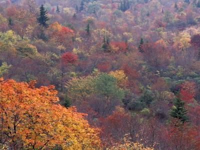 Autumn color in the Great Smoky Mountains National Park, Tennessee, USA-William Sutton-Photographic Print