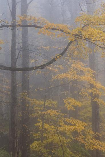 Autumn Colored Trees In Great Smoky Mountains National Park-Jay Goodrich-Photographic Print