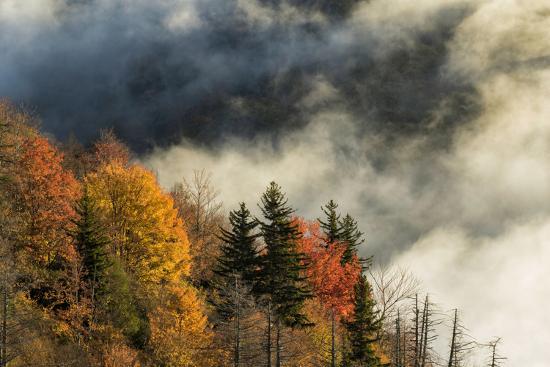 Autumn Colors and Mist at Sunrise, North Carolina-Adam Jones-Photographic Print