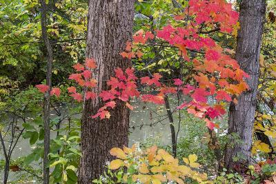 Autumn Colors at Independence State Park in Defiance, Ohio, USA-Chuck Haney-Photographic Print