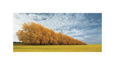 Autumn Colors, no. 1-Carlos Casamayor-Giclee Print