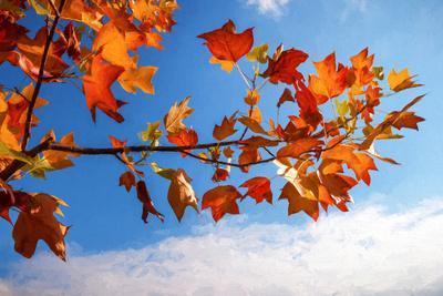 Autumn Colors-Philippe Sainte-Laudy-Photographic Print