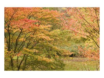 Autumn Colour-Chris Farrow-Art Print