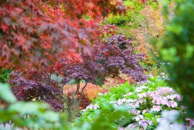 Autumn Colours in Grasmere, Lake District, Cumbria, England, United Kingdom, Europe-Frank Fell-Photographic Print