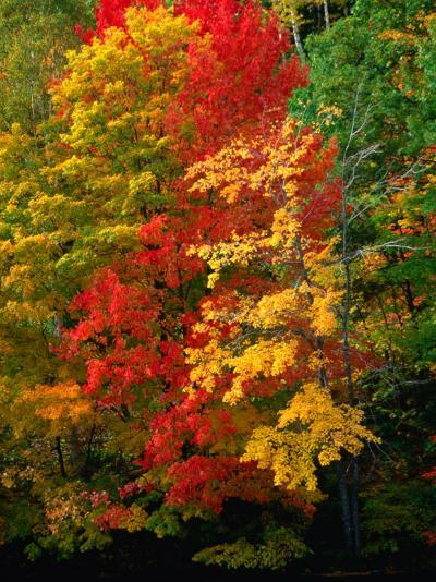 Autumn Colours in Marquette County, USA-Charles Cook-Photographic Print