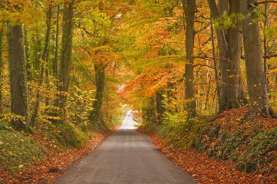 Autumn Colours in the Beech Trees on the Road to Turkdean in the Cotwolds-Julian Elliott-Photographic Print