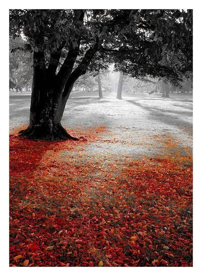 Autumn Contrast-PhotoINC Studio-Art Print