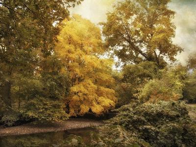 Autumn Creek-Jessica Jenney-Giclee Print
