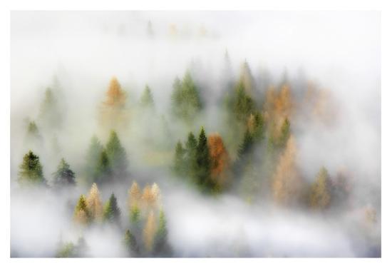 Autumn Dream-Kristjan Rems-Giclee Print
