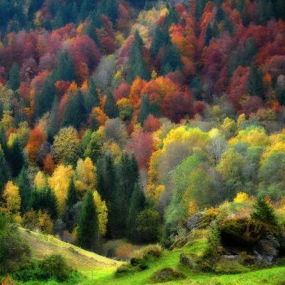 Autumn Erupting-Philippe Sainte-Laudy-Photographic Print