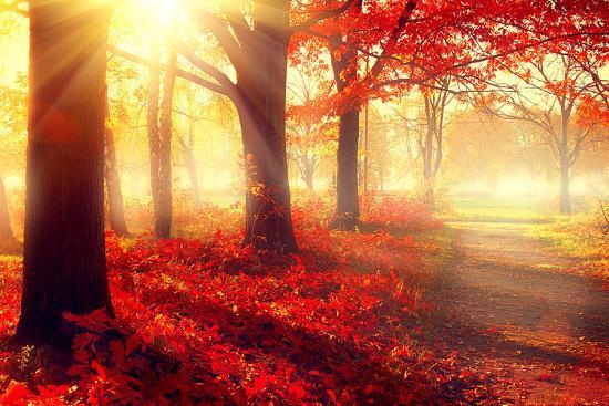 Autumn. Fall Scene. Beautiful Autumnal Park. Beauty Nature Scene. Autumn  Trees and Leaves, Foggy Fo' Photographic Print - Subbotina Anna   Art.com