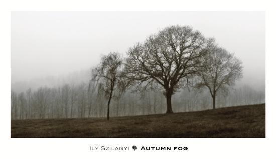 Autumn Fog-Ily Szilagyi-Art Print
