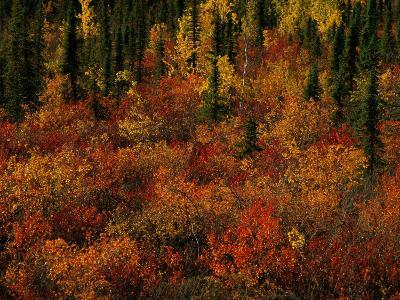 Autumn Foliage Along the Mckenzie River-Raymond Gehman-Photographic Print