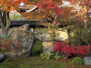 Autumn Foliage in Japanese Garden
